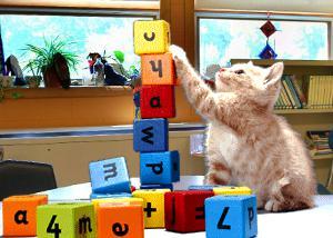 Cat and building blocks